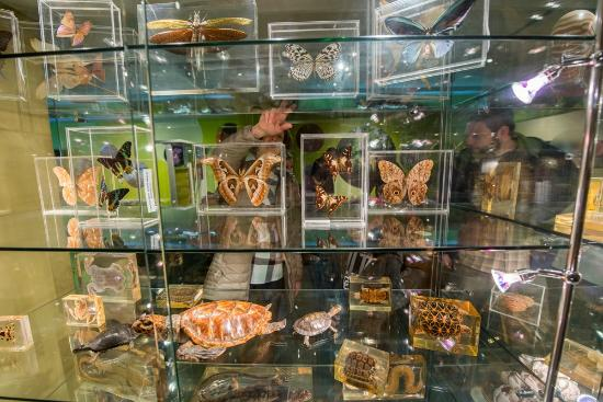 North Museum of Nature and Science: Just a few of the amazing exotic tropical insects on display in the Explore Nature Gallery