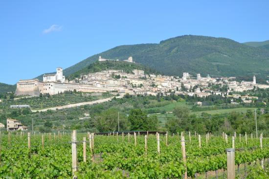 Azienda Agraria Saio: Saio vineyard looking up to Assisi