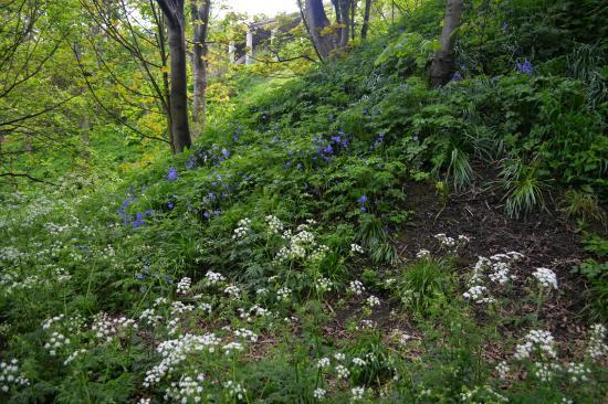 South Cliff Italian Gardens: walk to the gardens