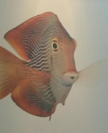 Ocean Grove Nj Restaurant Fish