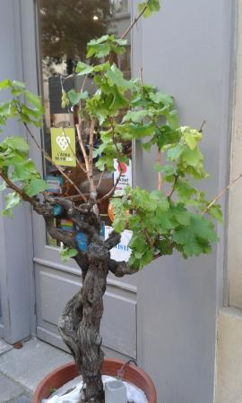 L'Ecole du Vin Bio