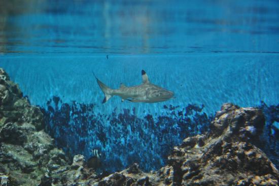 12 - Picture of Aquarium Mare Nostrum, Montpellier - TripAdvisor