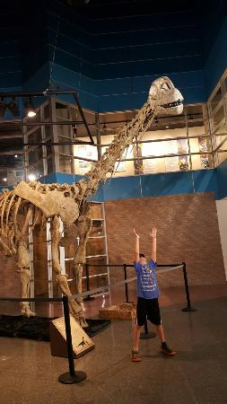 Lafayette Science Museum : Dylan with the dino