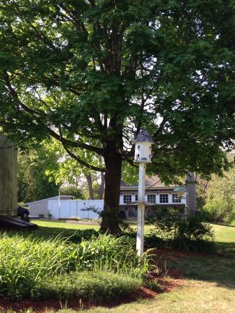Sea Meadow Inn at Isaiah Clark House: Relaxing back yard.