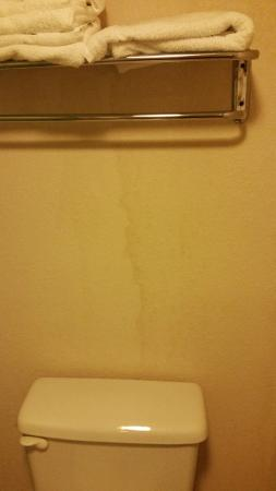 Sleep Inn North Lake : This is the bathroom wall. There was a water stain that was damp and smelled like mildew.