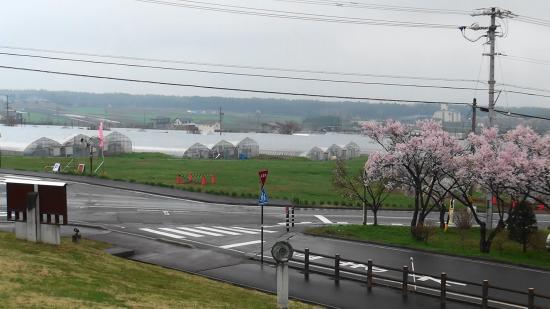 Miharasi Farm: いちご園と桜