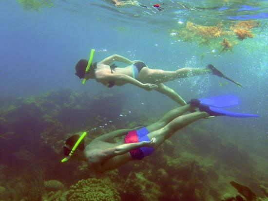 photo4.jpg - Picture of St.Thomas Scuba and Snorkel ...