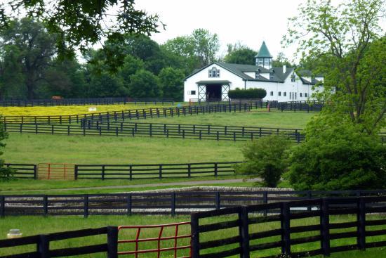 Lexington Area Horse Farm Tours