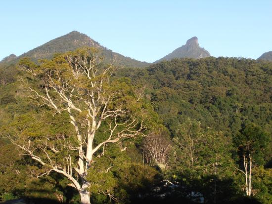 A View of Mt Warning Bed & Breakfast: View 1 of Mt Warning