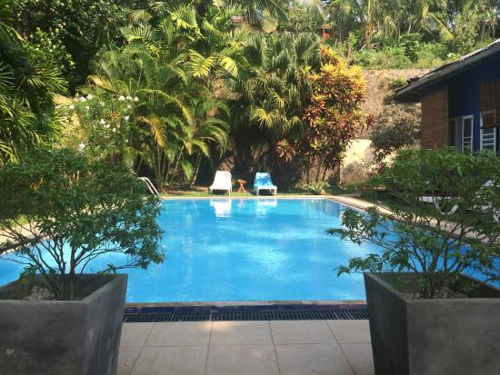Black Beauty Guesthouse: Wonderful swimming pool
