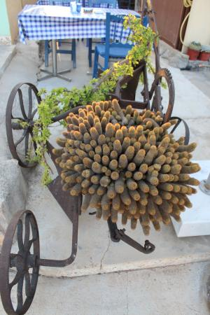 Sotira, Chipre: quirky plant container!
