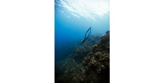 Apnea Total - Day Courses: Freediving over corals