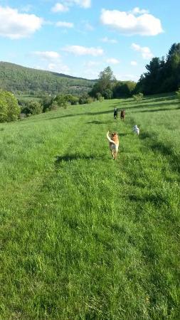 Dog Mountain: Hiking
