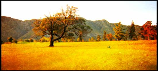 Swellendam Golf Course: sunset & beautiful tree No.5
