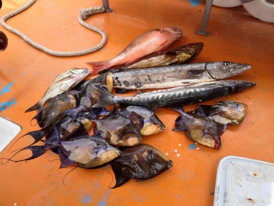 plenty of fish us