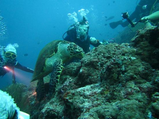 Dive The World Maldives: Friendly sea turtle.