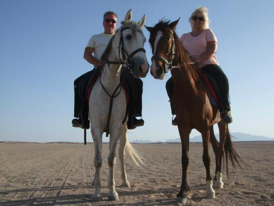 Gamila Stable Club Horse and Camel Riding: great evening in the sunshine.