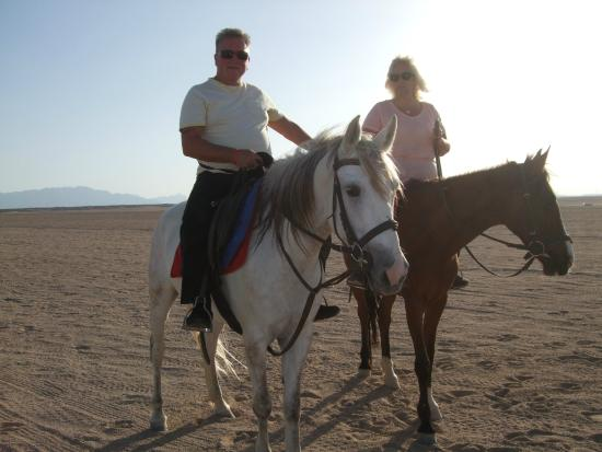 Gamila Stable Club Horse and Camel Riding: we had a great evening.