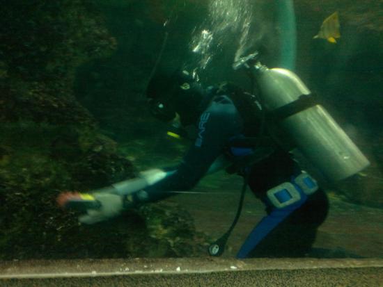 Underwater World and Dolphin Lagoon: underwater world