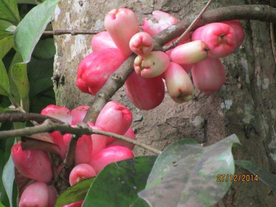 Hotel Guarana: die Eichkätzchen ließen sich die Rosenäpfel gut schmecken und polterten übers Dach