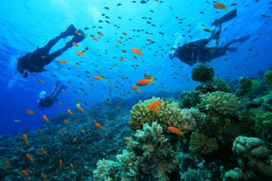 Octopus Diving Center: Inside the beautiful ocean