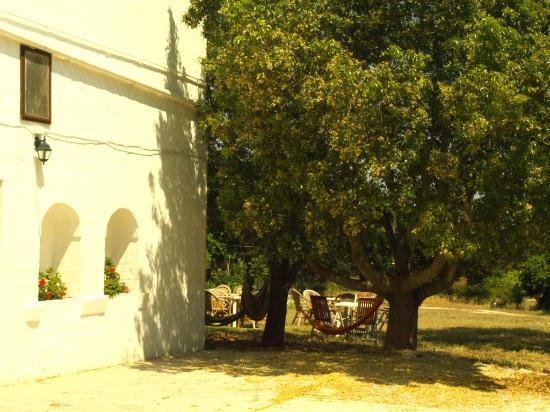 Masseria Santanna B&B : particolare della facciata esterna