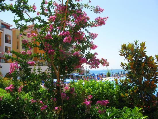 Marina Cape Hotel: бассейн