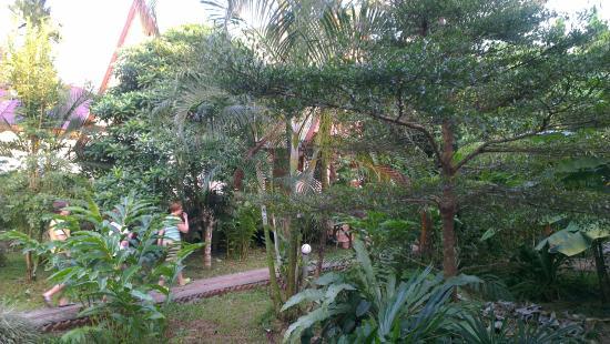 Khao Sok Green Valley Resort: Территория