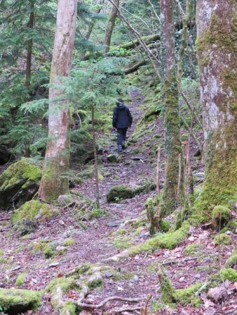 Coed Cae Bed & Breakfast: New precipice walk