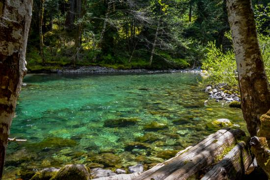 how to get clean water in the forest