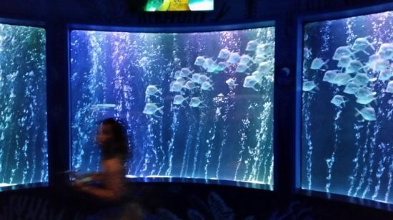 Jelly Fish Pretty Picture Of Sea Life Kansas City