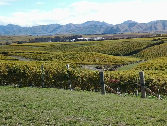 Yealands Estate Winery: Innovative farming practices