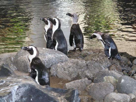 Image result for hyatt regency maui penguins