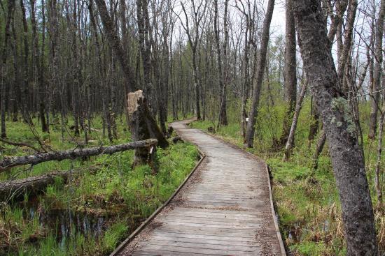 Orr, MN: Bog Walk