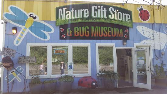 Bremerton Bug Museum: The front of the Bug Museum