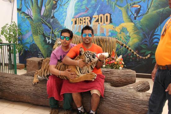 tigers - Picture of Sriracha Tiger Zoo, Chonburi - TripAdvisor