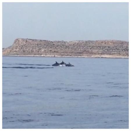 Foto de Dolphin Boat Safari