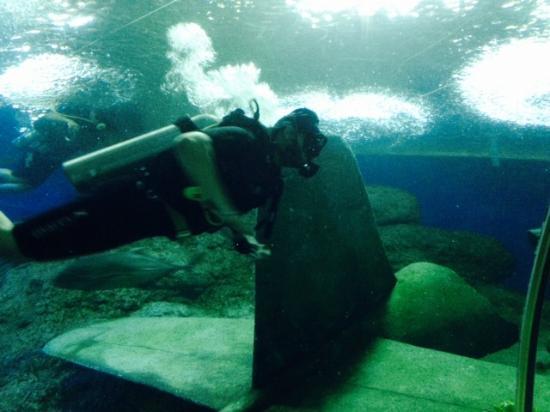 ... full of jellyfish. - Picture of Underwater World Pattaya, Bang Lamung