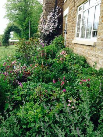 Hall Farm Bed & Breakfast : The Garden's starting to look colourful at Hall Farm