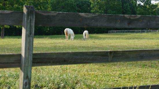 Barking Fox Farm Guest House : Wonderful horse farm