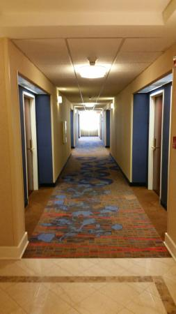 Courtyard Louisville Airport: Hallways