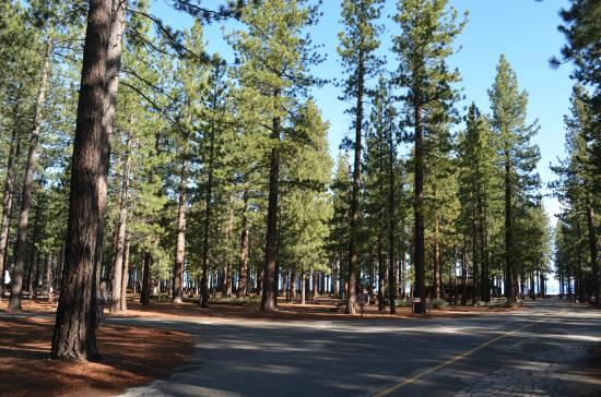 Campground by the Lake: Trees everywhere