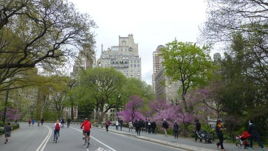 Central Park Bike Tours: Wonderful Threes in april