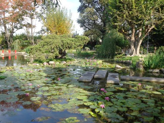 Foto de jardin japones buenos aires flores de planta - Plantas para jardin japones ...