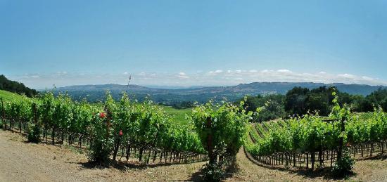 B. Wise Vineyards : View towards San Francisco