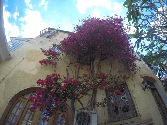 La Rosa de Ortega Photo