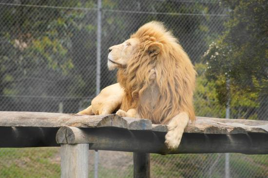 mogo zoo - photo #39