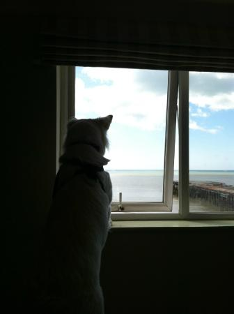 White Rock Hotel: Our dog taking in the view
