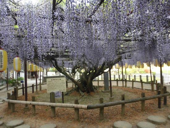 Josenjino Fuji Temple