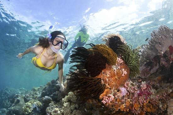 Wakatobi Dive Resort: Snorkeling on Wakatobi's House Reef